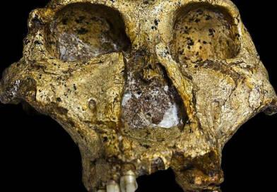 scoperta_cranio_fossile